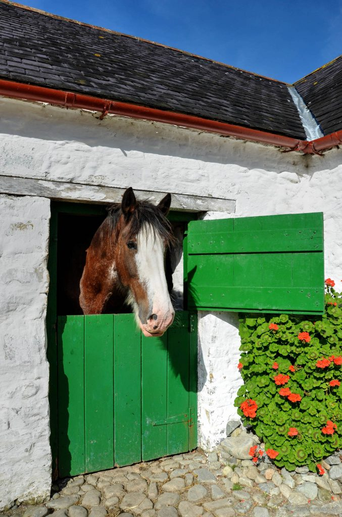 Horse, Muckross Traditional Farms