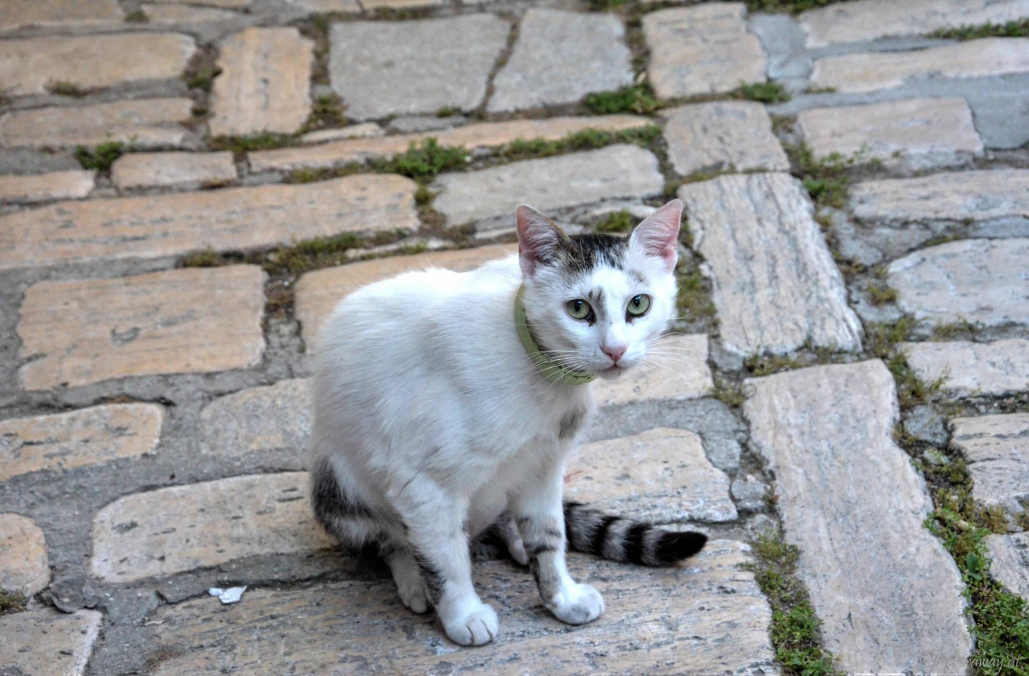 Katze in Rovinj